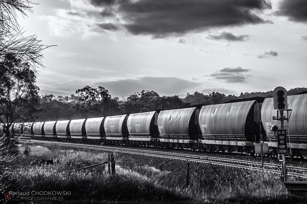 Un train chargé se joue de la lumière de la fin de journée dans un décor typiquement australien.